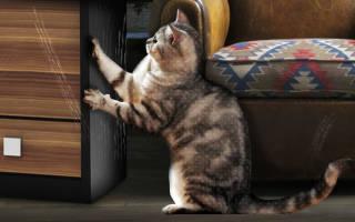 Каким бывает штрих для мебели, нюансы выбора