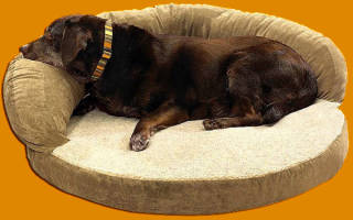 Обзор лучших кроватей для собак, основные критерии выбора